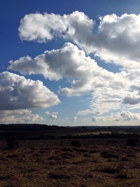 Life is beautiful. Taken at the weekend on a lovely forest walk  #no filers on enhancement.
